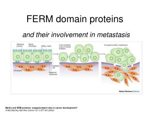 FERM domain proteins