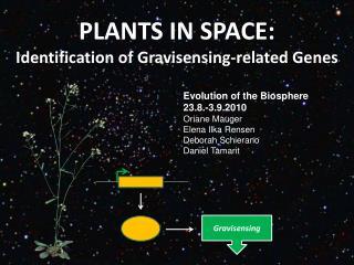 PLANTS IN SPACE: Identification of Gravisensing-related Genes