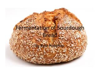 Fermentation of Sourdough Bread