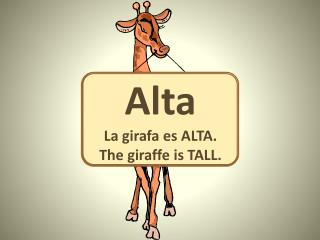 Alta La  girafa es  ALTA. The giraffe is  TALL.