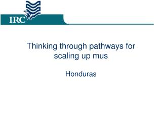 Thinking through pathways for scaling up mus