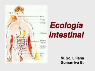 Ecología Intestinal