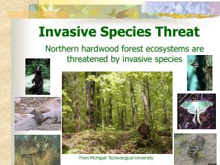 Invasive Species Threat