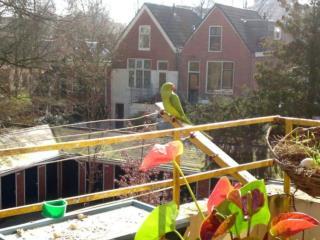 Anna Kloos: vogel op balkon
