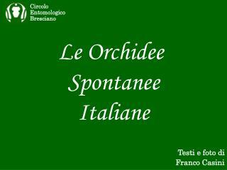 Le Orchidee  Spontanee Italiane