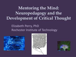 Mentoring the Mind: Neuropedagogy and the Development of Critical Thought