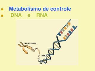 Metabolismo de controle     DNA    e    RNA