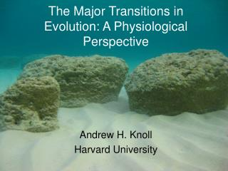 The Major Transitions in Evolution: A Physiological Perspective