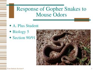 Response of Gopher Snakes to Mouse Odors