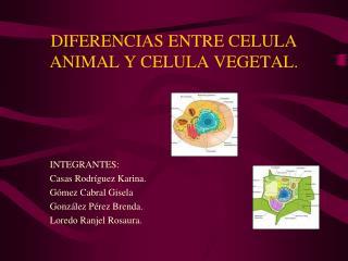 DIFERENCIAS ENTRE CELULA ANIMAL Y CELULA VEGETAL.