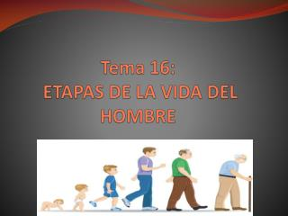 Tema 16:  ETAPAS DE LA VIDA DEL HOMBRE