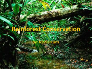 Rainforest Conservation