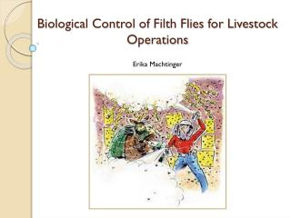 Biological Control of Filth Flies for Livestock Operations