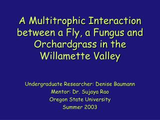 A Multitrophic Interaction between a Fly, a Fungus and Orchardgrass in the Willamette Valley