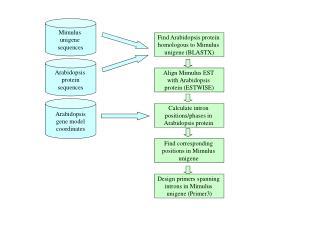 Find Arabidopsis protein  homologous to Mimulus  unigene (BLASTX)