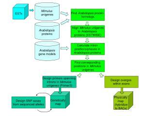 Find  Arabidopsis  protein  homologs
