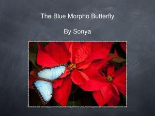 The Blue Morpho Butterfly By Sonya
