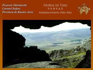 Proyecto Vitivinícola Coronel Suárez Provincia de Buenos Aires
