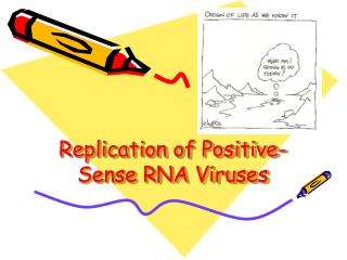 Replication of Positive-Sense RNA Viruses