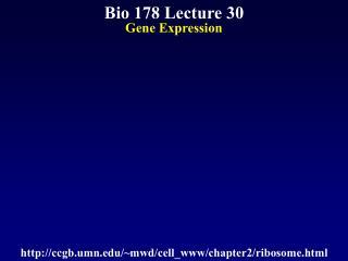 Bio 178 Lecture 30