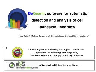 Be Quanti : software for automatic detection and analysis of cell adhesion underflow