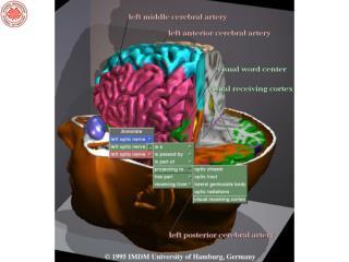 İnsan beyni günün birinde nasıl  çalıştığını anlayabilecek mi ?
