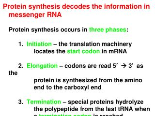 Protein synthesis decodes the information in messenger RNA