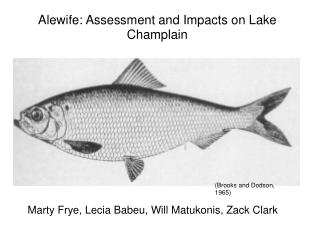 Alewife: Assessment and Impacts on Lake Champlain