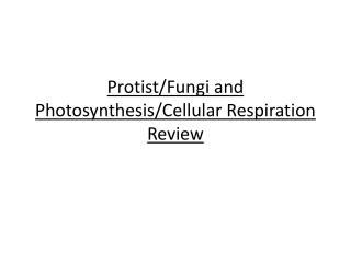 Protist /Fungi and Photosynthesis/Cellular Respiration Review