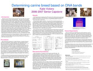 Determining canine breed based on DNA bands Katie Vickers 2006-2007 Senior Capstone