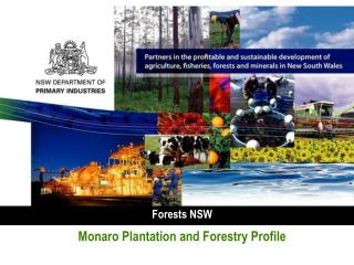 Forests NSW