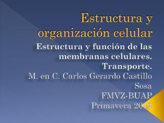 Estructura y organización celular