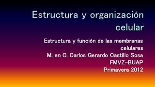 Estructura y organizaci�n celular