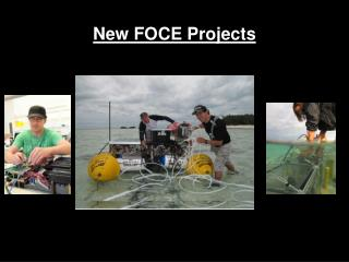 New FOCE Projects