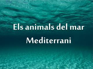 Els animals del mar Mediterrani