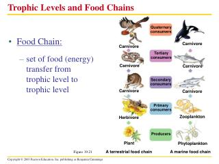 Trophic Levels and Food Chains