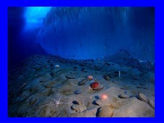 Benthic Environment - Benthos