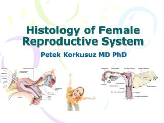 Histology of Female Reproductive System