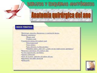 Morfología, situación, dimensiones y constitución interna. Regiones anatómicas: Margen anal.