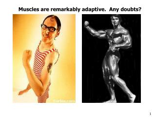Muscles are remarkably adaptive.  Any doubts?