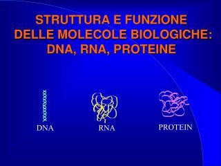 STRUTTURA E FUNZIONE  DELLE MOLECOLE BIOLOGICHE: DNA, RNA, PROTEINE