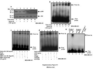 Supplementary Figure S1   (Mishra  et al )