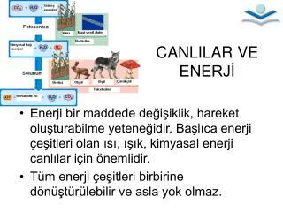 CANLILAR VE ENERJİ