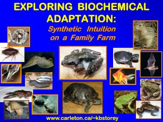 EXPLORING  BIOCHEMICAL ADAPTATION:  Synthetic   Intuition  on  a  Family  Farm
