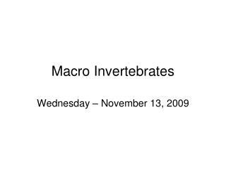 Macro Invertebrates