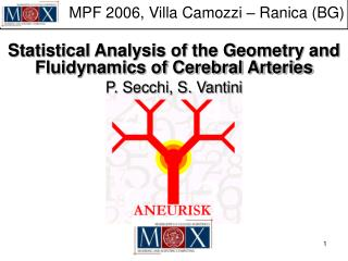 Statistical Analysis of the Geometry and Fluidynamics of Cerebral Arteries