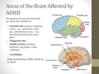 Areas of the Brain Affected by ADHD