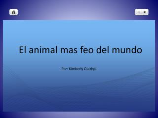 El animal mas feo del mundo
