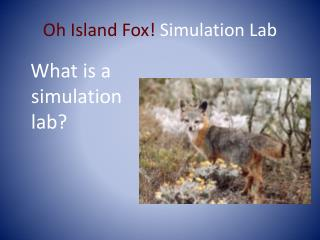Oh Island Fox!  Simulation Lab