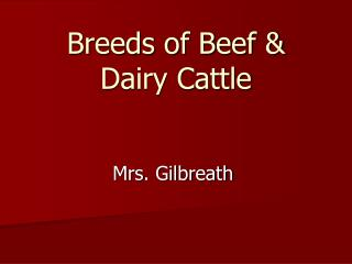 Breeds of Beef & Dairy Cattle